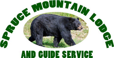 Black Bear Hunting – Spruce Mountain Lodge in Maine